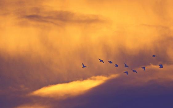 Остров белых птиц