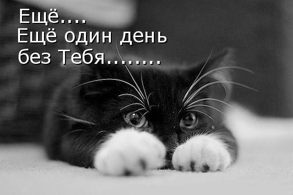 День без тебя